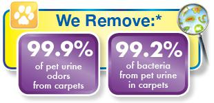Chem-Dry removes pet odors and bacteria